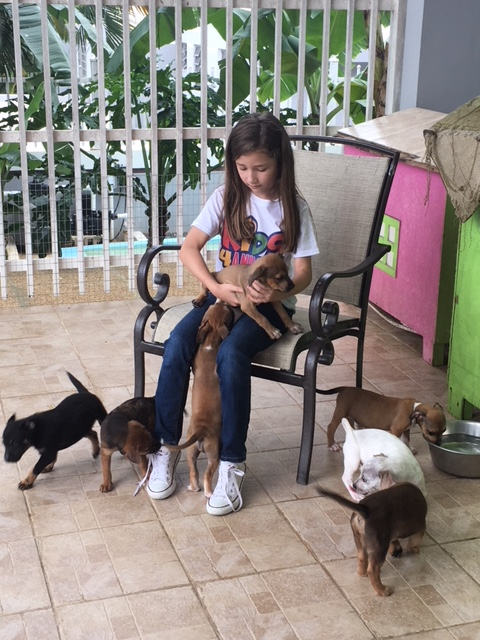 Isabella dogs