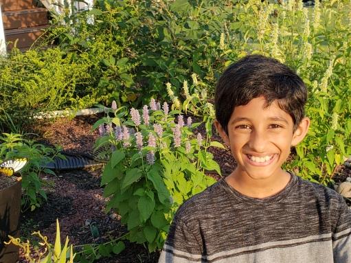pollinator health - conservationist - kedar 2018